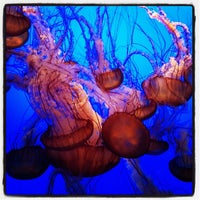 Photo taken at Monterey Bay Aquarium by Brian D. on 2/8/2013
