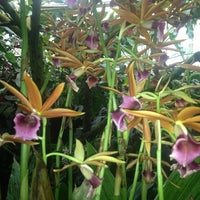Photo taken at Marie Selby Botanical Gardens by Cassie F. on 3/20/2013