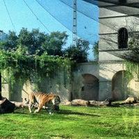 Photo taken at LSU - Mike's Habitat by Jordan S. on 10/20/2012