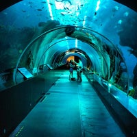 Photo taken at S.E.A. Aquarium by Cahya Y. R. on 3/4/2013