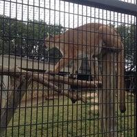 Photo taken at Abilene Zoo by Rose S. on 11/10/2013