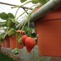 Photo taken at Big Red Strawberry Farm (Agro Tourism Garden) by K L. on 2/14/2013