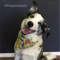 Photo taken at Pampered Tails by Nelson Q. on 4/2/2016