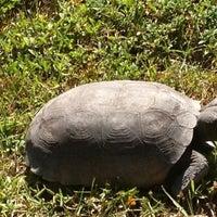"""Photo taken at J.N. """"Ding"""" Darling National Wildlife Refuge by Jennifer G. on 10/20/2012"""