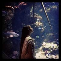 Photo taken at Steinhart Aquarium by Anastasia S. on 6/23/2013
