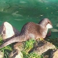 Photo taken at Wildpark Schwarze Berge by Galina P. on 10/27/2012