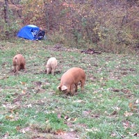 Photo taken at Terrapin Hill Farm by Cathy C. on 11/1/2014