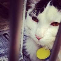 Photo taken at Animal Humane Society by Sara H. on 1/13/2013