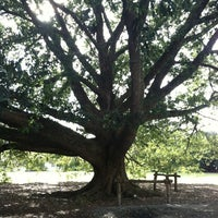 Photo taken at The Kissing Tree by Holly M. on 10/18/2012