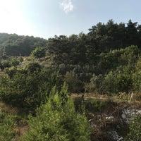Photo taken at Alibodalar by Hayriye A. on 9/17/2017