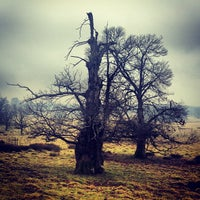Photo taken at Petworth Park by Olly S. on 3/7/2013