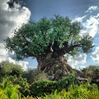 Photo taken at Disney's Animal Kingdom by Chris J. on 1/15/2013