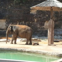 Photo taken at San Antonio Zoo by Mindy J. on 10/4/2012