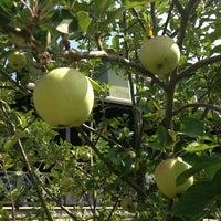 Photo taken at orchard by ༄EBRU༄ on 7/15/2013