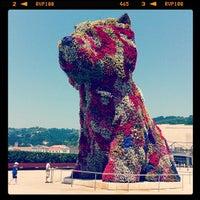 7/9/2013에 Roberto A.님이 Puppy (Guggenheim)에서 찍은 사진