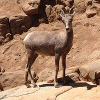 Photo taken at San Diego Zoo Safari Park by JediLarry B. on 7/28/2013