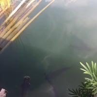 Photo taken at Ruen Pae Fishing Park by Padka P. on 4/29/2017
