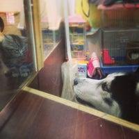 Photo taken at Happy Pet Animal Hospital 猫腾狗跃动物医院 by S O. on 1/13/2013