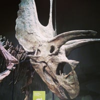 Photo taken at Sam Noble Oklahoma Museum of Natural History by Gabby N. on 4/5/2013
