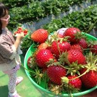 Photo taken at 内山苺園 by ıɾuıɥs o. on 5/6/2013