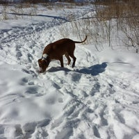 Photo taken at Howard Dog Park by Lisa E. on 3/2/2014