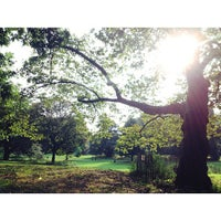Photo taken at Long Meadow by Chris P. on 9/1/2013