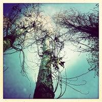 12/15/2012 tarihinde serdarileriziyaretçi tarafından Seğmenler Parkı'de çekilen fotoğraf