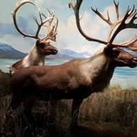 Photo prise au Hall of North American Mammals par Chiara le12/6/2017