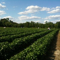 Photo taken at Strawberries on 903 by Kim F. on 5/13/2013