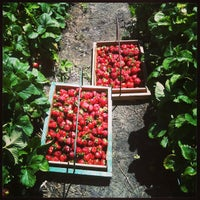 Photo taken at Strawberries on 903 by Kim F. on 5/26/2013