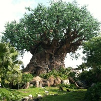 Photo taken at Disney's Animal Kingdom by Megan S. on 5/19/2013