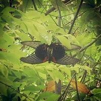Photo taken at Ton Tarn Resort And Spa by Arlee T. on 12/22/2012