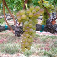 Photo taken at Saralee Vineyards by William A. on 9/15/2012
