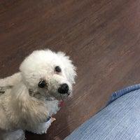 Foto scattata a Montrose Veterinary Clinic da Bobby W. il 1/28/2017