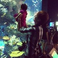 Photo taken at S.E.A. Aquarium by Kaz Q. on 7/13/2013