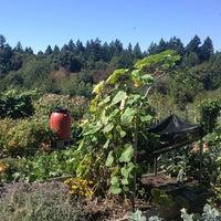 Photo taken at Gabriel Park Community Garden by Matthew B. on 9/1/2013