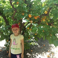 Photo taken at Bacchini's Fruit Tree by Miroslav S. on 5/9/2015