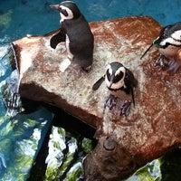 Photo taken at Dallas World Aquarium by Que S. on 5/14/2013