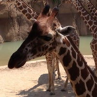 Photo taken at Dallas Zoo by B. Taylor A. on 7/7/2013
