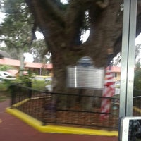 Photo taken at The Old Senator Tree by ALani A. on 11/15/2012