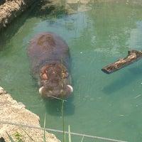 Photo taken at Toronto Zoo by Katya R. on 6/14/2013