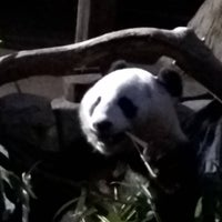 Photo taken at Giant Panda Research Station by Joseph W. on 12/20/2015