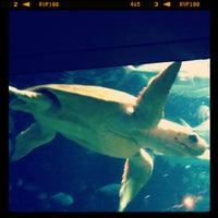 Photo taken at South Carolina Aquarium by Brianne S. on 12/2/2012