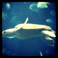 Photo taken at South Carolina Aquarium by Brianne S. on 12/2/2012