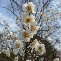 Photo taken at 万博記念公園 梅林 by あねもね . on 3/19/2017