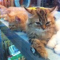 Photo taken at Qian Hu Pet Shop by Grangmother on 10/5/2013