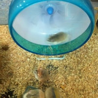 Photo taken at Qian Hu Pet Shop by Grangmother on 12/17/2012