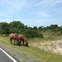 Photo taken at Assateague Visitor Center by Rory L. on 8/2/2015