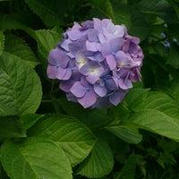 Photo taken at 大谷戸公園 by Hiroshi T. on 6/7/2013