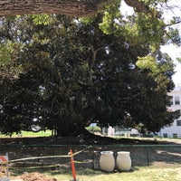 Photo taken at Moreton Bay Fig Tree by James H. on 7/28/2017